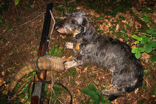 Fibi auf Jagd
