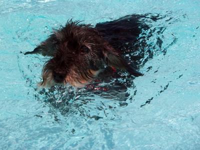 Aïsha im Pool